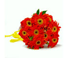 Giftacrossindia Gorgeous Ten Gerberas Bunch (GAIMPHD0043), 1000 gms