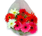 Giftacrossindia Fresh Mix Gerberas Bouquet (GAIMPHD0527), 1000 gms