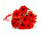 Giftacrossindia Bunch of Ten Red Gerberas (GAIMPHD0045), 1000 gms