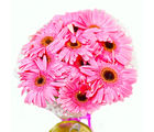 Giftacrossindia Bunch of Ten Pink Gerberas (GAIMPHD0046), 1000 gms