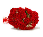 Giftacrossindia Resplendent Fifteen Red Carnation Bunch (GAIMPHD0011), 1000 gms