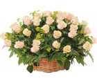 India Gifts Hub Peach Roses Basket 50 Flowers (IGHFLOW081)